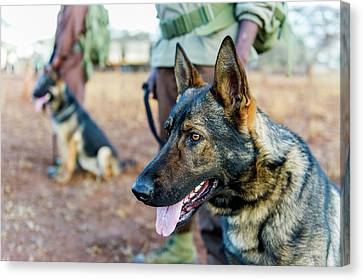 Anti-poaching Dog Patrol Canvas Print