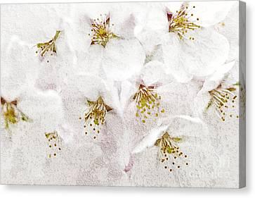 Tree Blossoms Canvas Print - Apple Blossoms by Elena Elisseeva