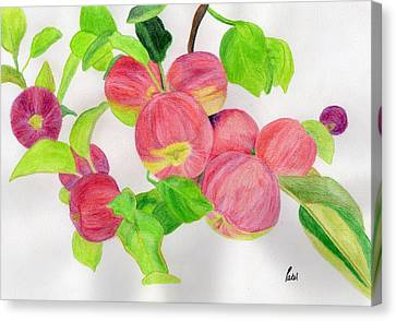 Apples Canvas Print by Bav Patel
