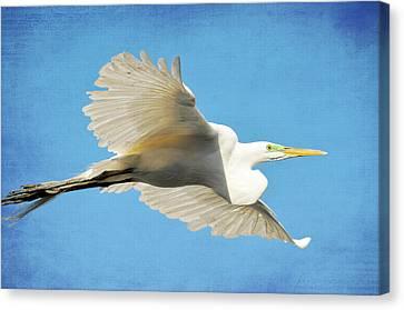 Aqua Canvas Print by Fraida Gutovich