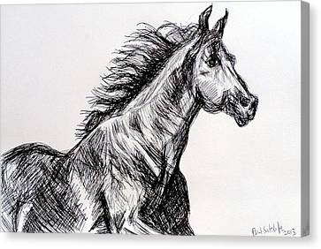 Running Horses Canvas Print - Arabian Horse by Paul Sutcliffe