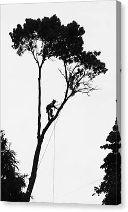 Arborist At Work Canvas Print