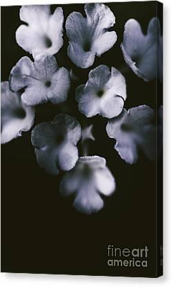 Artistic Dark Blue Flowers In Night Winter Garden Canvas Print by Jorgo Photography - Wall Art Gallery