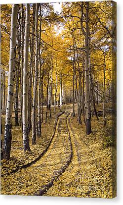 Old Country Roads Canvas Print - Aspen Road Co by Sean Bagshaw