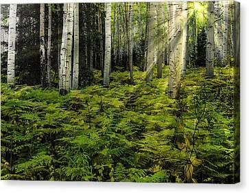 Aspen Sunrise Canvas Print