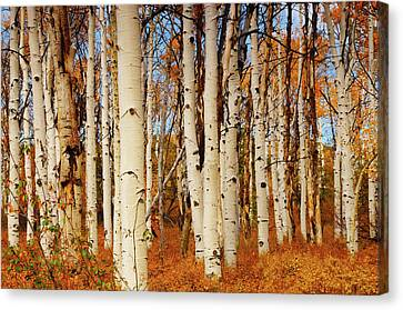 Aspens In Autumn, Zion National Park Canvas Print by Michel Hersen