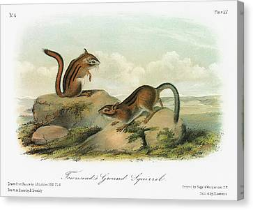 Audubon Chipmunk Canvas Print by Granger