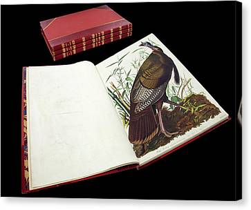 Audubon's The Birds Of America Canvas Print by Natural History Museum, London