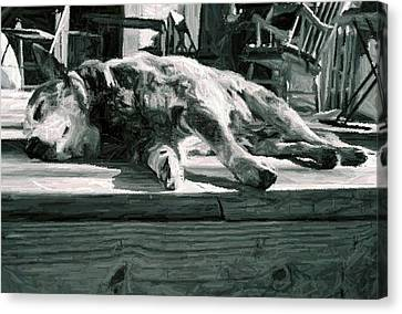 Australian Cattle Dog Portrait Canvas Print