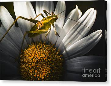 Australian Grasshopper On Flowers. Spring Concept Canvas Print by Jorgo Photography - Wall Art Gallery