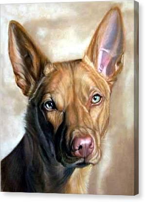 Australian Kelpie Dog Portrait Canvas Print
