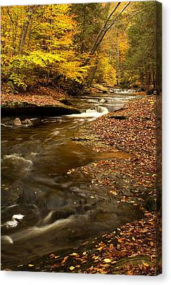 Tree Roots Canvas Print - Autumn And Creek by Amanda Kiplinger