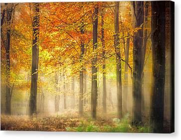 Woodlands Scene Canvas Print - Autumn Gold by Ian Hufton