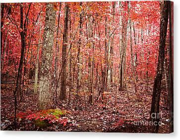 Autumn Landscape Canvas Print by Kim Fearheiley