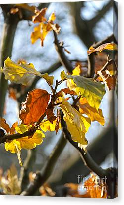Autumn Leaves Canvas Print by Design Windmill