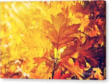 Maple Season Canvas Print - Autumn Leaves by Jelena Jovanovic