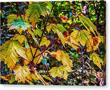 Autumn Leaves Canvas Print by Omaste Witkowski