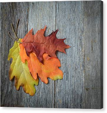 Autumn Leaves On Rustic Wooden Background Canvas Print