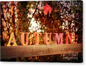 Autumn Letters Canvas Print by Amanda Elwell