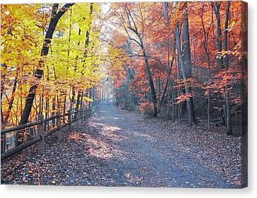 Wissahickon Canvas Print - Autumn On Forbidden Drive by Bill Cannon