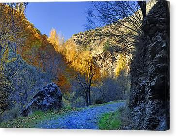 Autumn Path Canvas Print by Guido Montanes Castillo