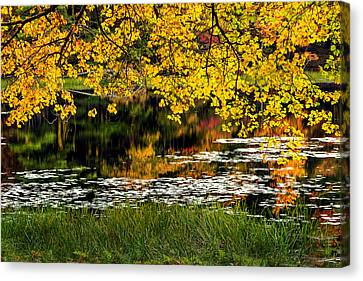 Autumn Pond 2013 Canvas Print by Bill Wakeley
