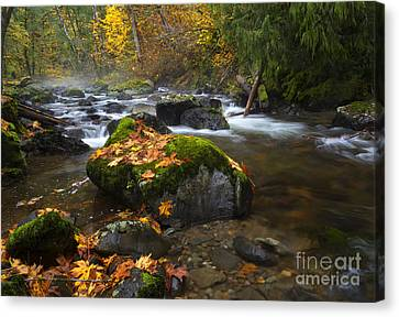 Autumn Stream Canvas Print by Mike Dawson