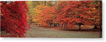 Autumn Trees In Westonbirt Arboretum Canvas Print by Panoramic Images