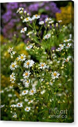 Autumn - Wildflowers - Asters Canvas Print by Henry Kowalski