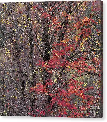 Autumn's Palette Canvas Print by Alan L Graham