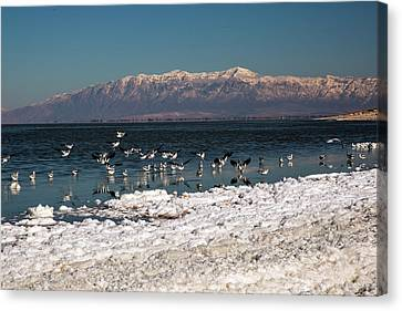 Dry Lake Canvas Print - Avocets On Antelope Island by Jim West