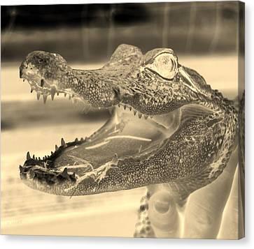 Baby Gator Neg Dark Sepia Canvas Print by Rob Hans