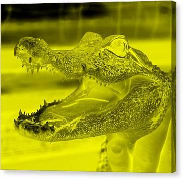 Baby Gator Neg Yellow Canvas Print by Rob Hans