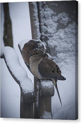 Canvas Print featuring the photograph Baby It's Cold Outside 2 by Phil Abrams