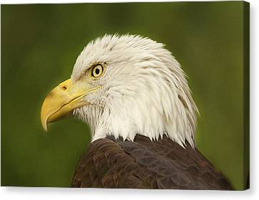 Canvas Print featuring the photograph Bald Eagle  by Brian Cross