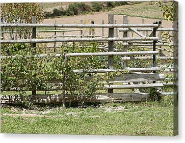 Bamboo Fence In A Pasture Canvas Print