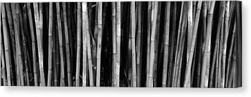 Bamboo Trees In A Botanical Garden Canvas Print by Panoramic Images