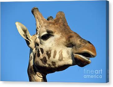 Baringo Giraffe Canvas Print by George Atsametakis