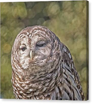 Canvas Print featuring the photograph Barred Hoot Owl Photo Art by Constantine Gregory