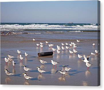 Canvas Print featuring the photograph Beach Birds by Ankya Klay
