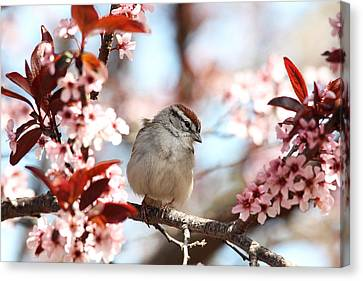Beautiful Sparrow Canvas Print by Trina  Ansel