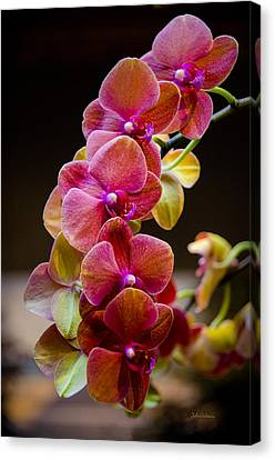 Beauty Of Orchids  Canvas Print by Julie Palencia