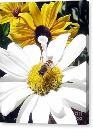 Canvas Print featuring the photograph Beecause by Janice Westerberg