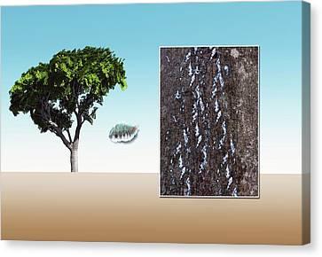 Beech Scale Canvas Print by Mikkel Juul Jensen