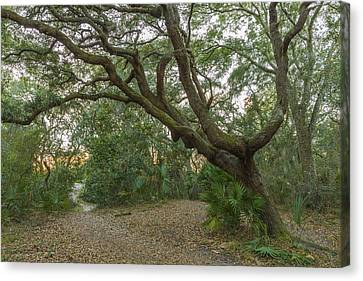 Behind The House Canvas Print by Jon Glaser