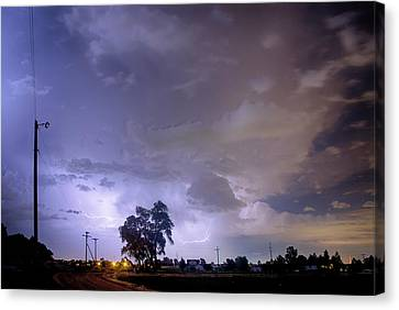 Behind The Tree Canvas Print by James BO  Insogna