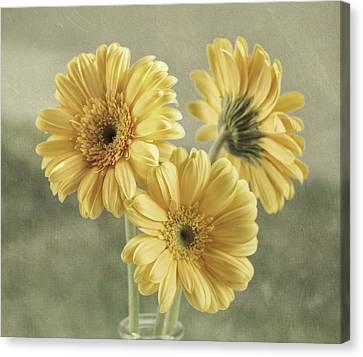 Flowers Gerbera Canvas Print - Believe by Kim Hojnacki
