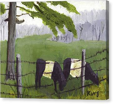 Belted Galloway Cows In Rockport Maine Canvas Print