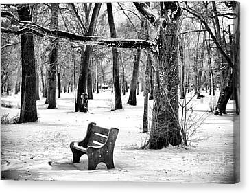 Bench Under The Tree Canvas Print by John Rizzuto