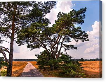 Bike Track In Hoge Veluwe National Park. Netherlands Canvas Print by Jenny Rainbow